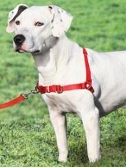 Mark's Shepherd Rescue - Dog Accessories